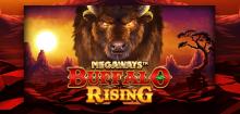 Buffalo Rising Megaways kostenlos spielen – der Überblick
